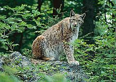 Nationalpark Bayerischer Wald in Bayern