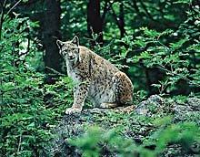 Tier-Freigehege Nationalpark Bayerischer Wald