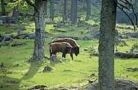 Tiere im Nationalpark Bayerischer Wald