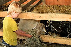 Bauernhofurlaub im Bayerischen Wald