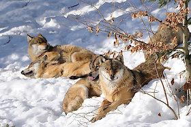 Tierfreigehege im Nationalpark Bayerischer Wald